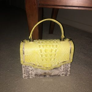 Brahmin sunflower Asher